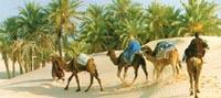 увеличить: поездка на верблюдах, Тунис